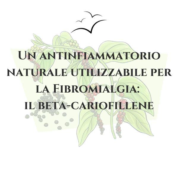 beta-cariofillene-e-fibromialgia-associazione-scientifica-fibromialgia