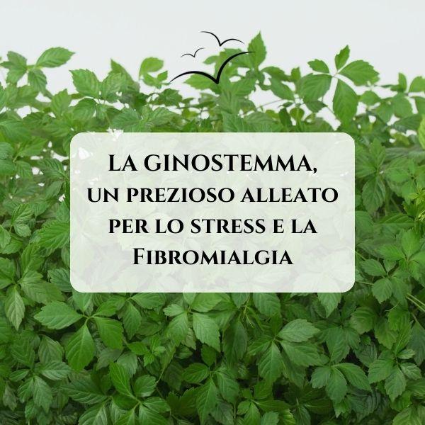 ginostemma-e-fibromialgia